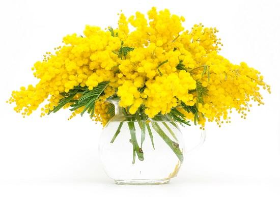 Купить цветы мимозы к 8 марта в днепропетровске упаковать бутылку в подарок мужчине