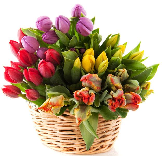 Как сделать большой букет из желтых, белых тюльпанов? - Flowerindustry.ru