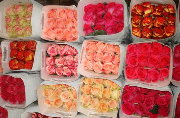 Поставщики цветов оптом