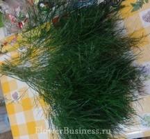 Растения для декора  Flowerindustry_ru_asparagus_03