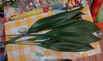 Растения для декора  Flowerindustry_ru_aspidistra_01
