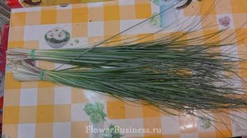 Растения для декора  Flowerindustry_ru_bergras_01
