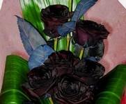 Грустный букет из черных цветов фото цветов
