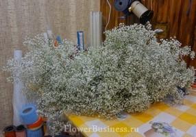 Растения для декора  Flowerindustry_ru_gipsofila_01