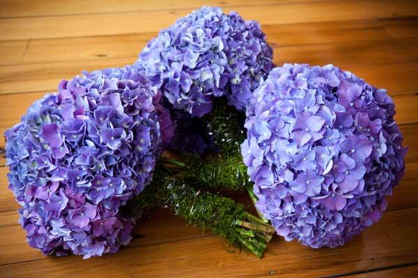 гортензия свадебная флористика цветочный бизнес