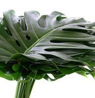 Растения для декора  Flowerindustry_ru_monstera_05