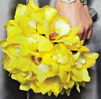 орхидеи фото цветы цветочный бизнес