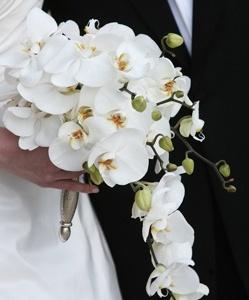 орхидеи свадебный букет фото цветы