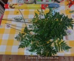 Растения для декора  Flowerindustry_ru_paporotnik_02