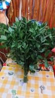 Растения для декора  Flowerindustry_ru_ruskus_03