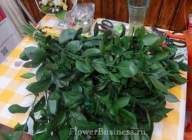 Растения для декора  Flowerindustry_ru_ruskus_06