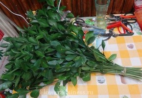 Растения для декора  Flowerindustry_ru_ruskus_07