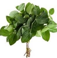 Растения для декора  Flowerindustry_ru_salal_01%281%29