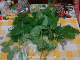 Растения для декора  Flowerindustry_ru_salal_02