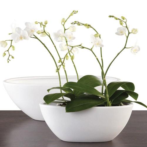 Горшки кашпо для орхидей