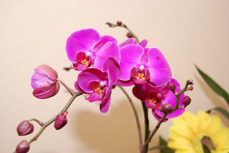 Картинки с 8 марта с орхидеями