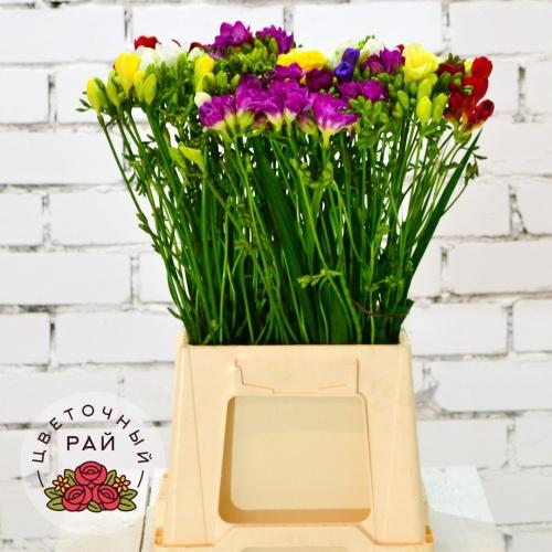 Где купить горшечные цветы на центральном рынке в ростове заказать цветной капрон для цветов в казахстане