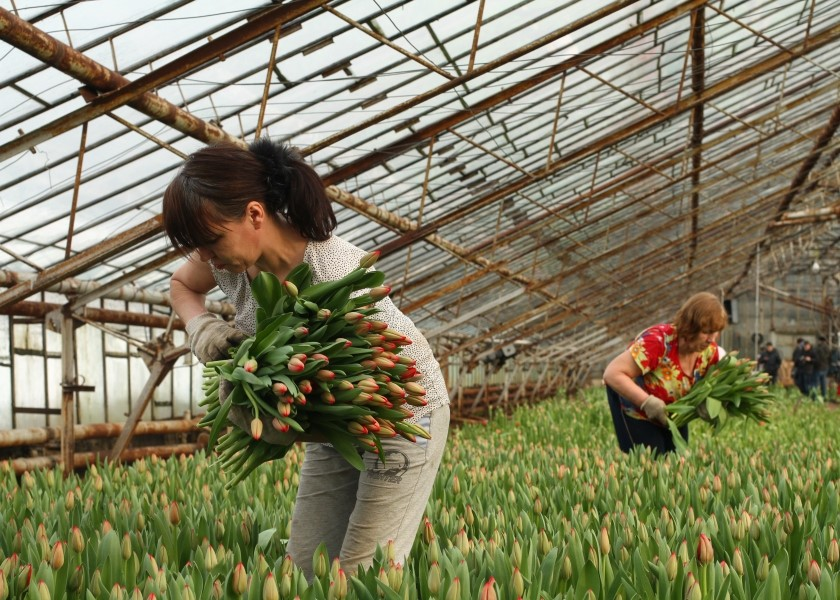 Предприятие по выращиванию цветов 74