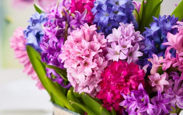 Картинки по запросу язык цветов